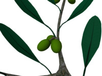 3d model olive twig leaves engraving