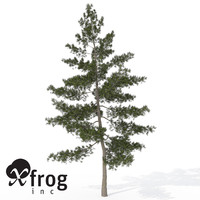 xfrogplants ohio buckeye tree 3d max