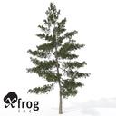 Japanese White pine 3D models