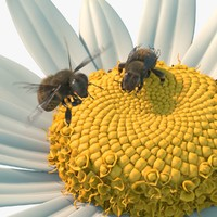 3d rigged bees flower animate