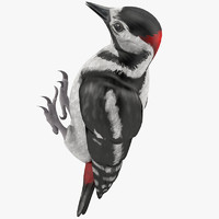 woodpecker toy 3d max