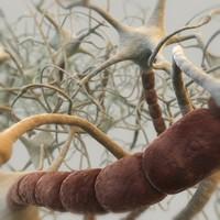 neural neurons max