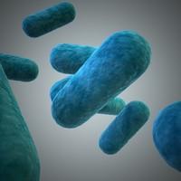 lactobacillus 3d model