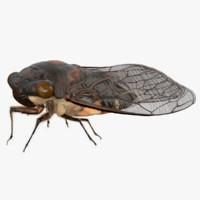 3d rigged cicada model