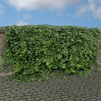 ivy hedge 3d model
