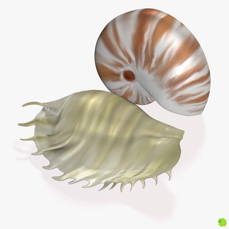 shells_signature_1200x1200.jpg