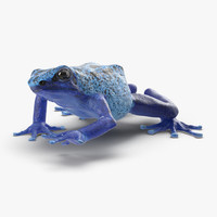 poison dart frog rigged 3d max
