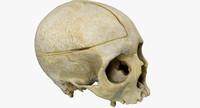 3d model human skull photoscanned
