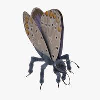 blue butterfly open 3d max