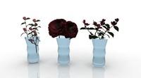 croatia flower camellia opatija 3ds