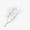 river birch 3D models