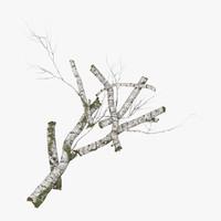 fallen logs birch 03 3d model