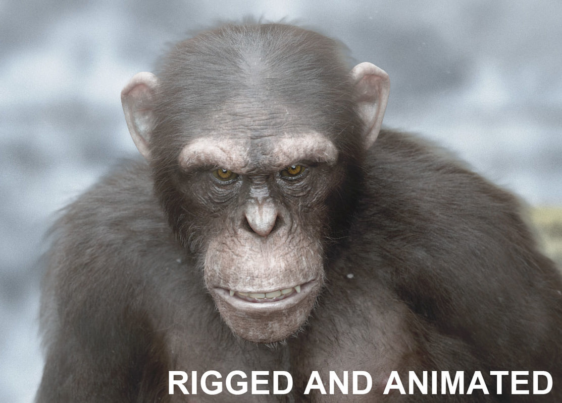 chimp6.jpg