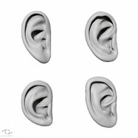 free 3ds mode ear anatomy set
