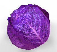 cabbage vegetable c4d