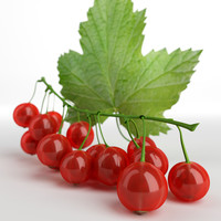 3d model red currant