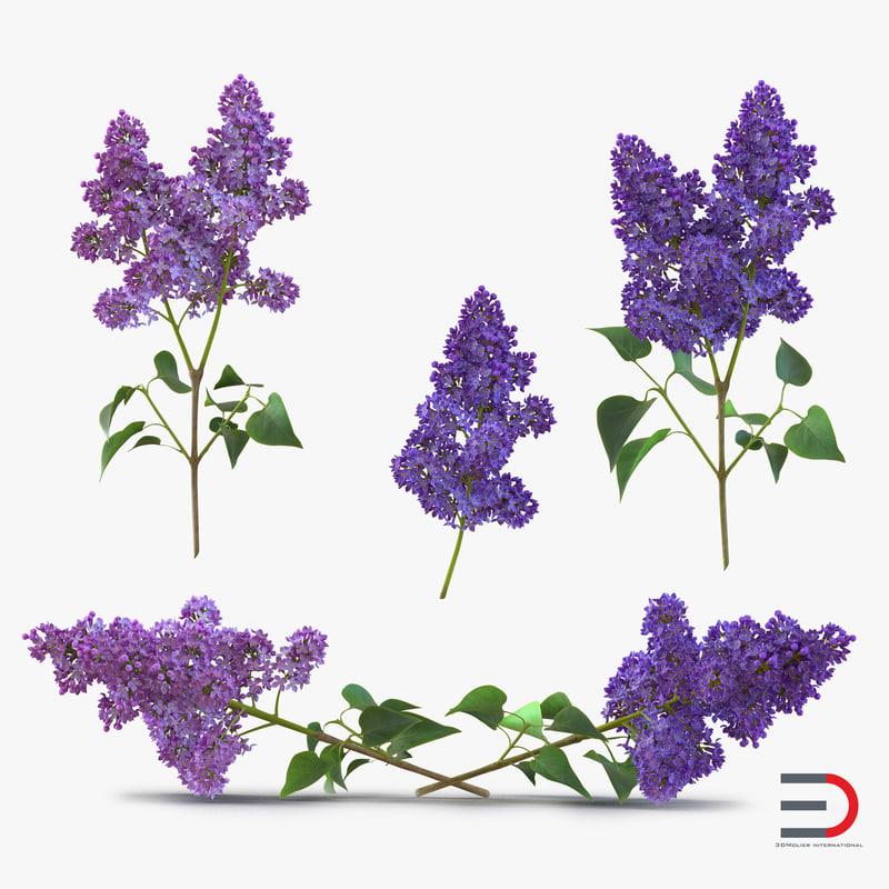 Syringa Lilac Collection 3d models 01.jpg