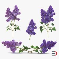 syringa lilac 3ds