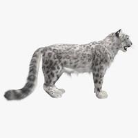 snow leopard fur max