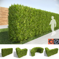 thuja tall hedges 3d max