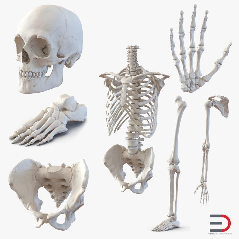 Male Skeleton Collection 3d models 001.jpg