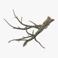 3d c4d fallen logs oak 01