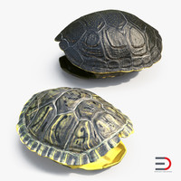 3d turtle shells