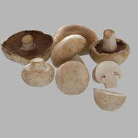Champignon collection