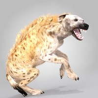 spotted hyena rig animation 3d model