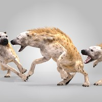 max spotted hyena rig animation