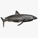 Sea Creatures 3D models