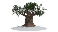 max tree old giant