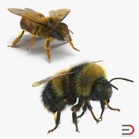 3d bee bumblebee