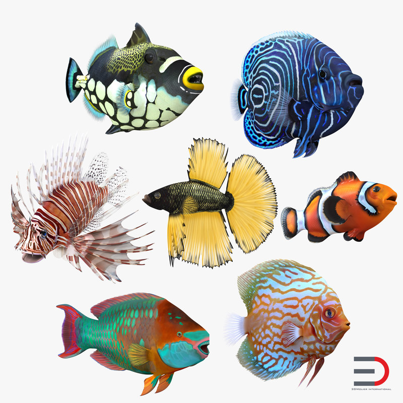 Coral Fishs Collection 3d model 001.jpg