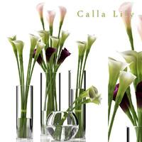 3d white calla model