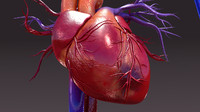 Infected circulatory system