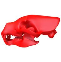 3d model print ready bear skull