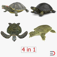 3d model rigged turtles 2