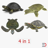 turtles 2 max