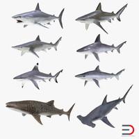 sharks 10 3d c4d