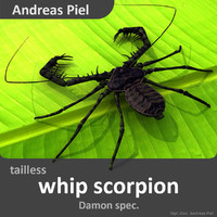 3d model realistic tailless whip scorpion