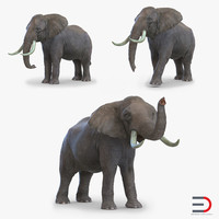 3d elephants set