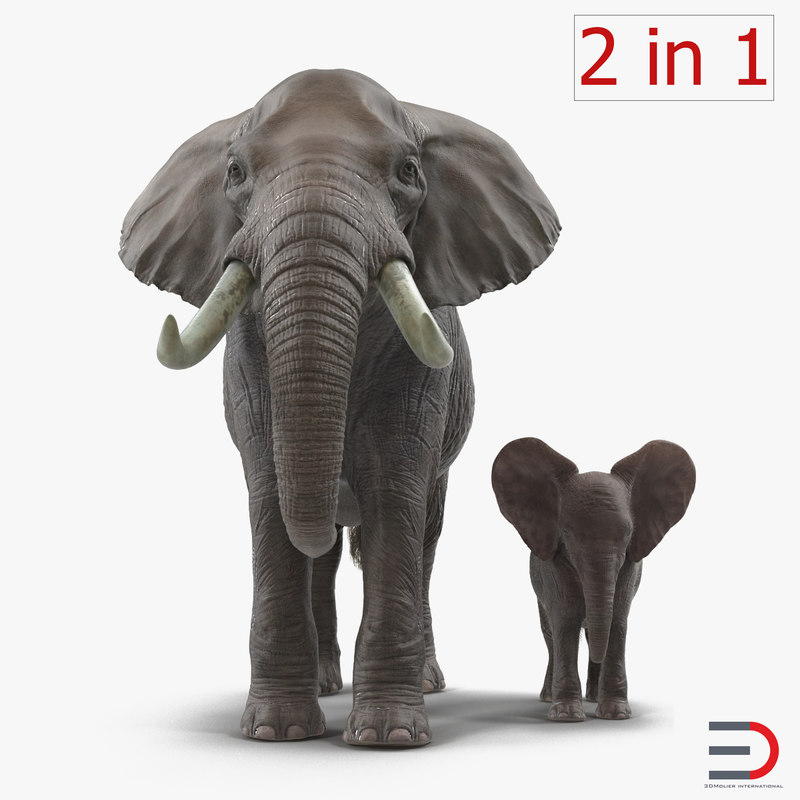 Elephants Rigged Collection 3d models 01.jpg