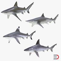 obj sharks 7