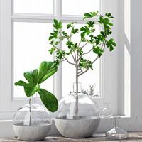 fig plants 3d model