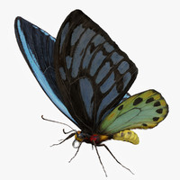 3d ornithoptera alexandrae butterfly