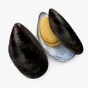 Mussel Shell 3D models
