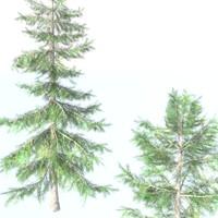 cedar tree fbx
