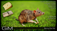 3d animal benny rat model