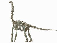 3d brachiosaurus dinosaur skeleton model